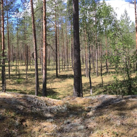 Experience Finnish Nature